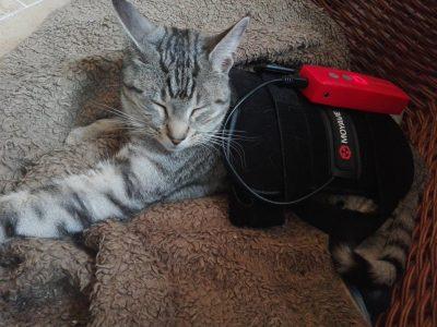 Patient Katze bei Tierarzt