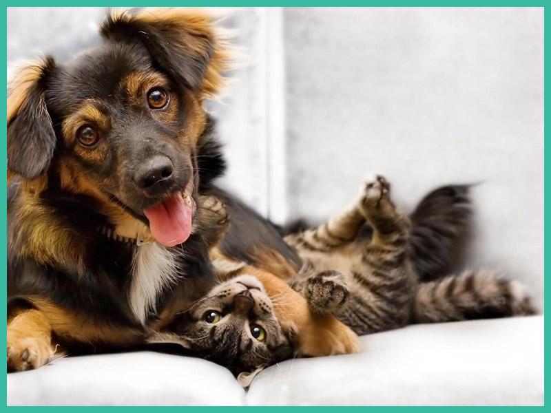 Hund und Katze bei Tierarzt