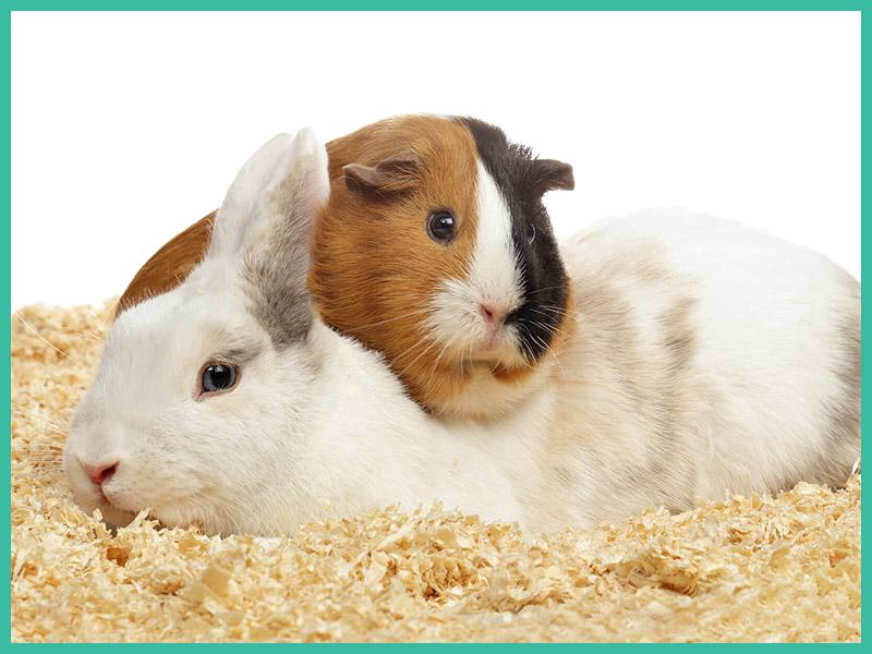 Hase Hamster Tierarzt