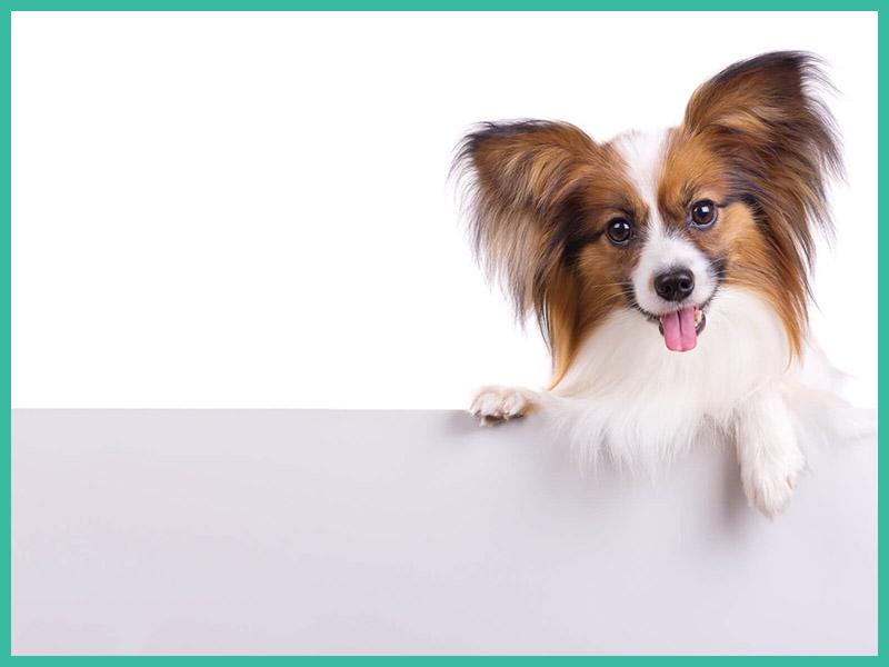 kleiner Hund Tierarzt