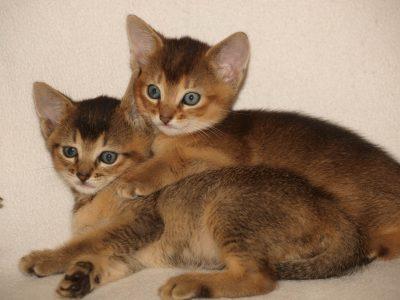 Baby Katzen beim Tierarzt