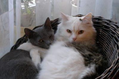 Katzen beim Tierarzt