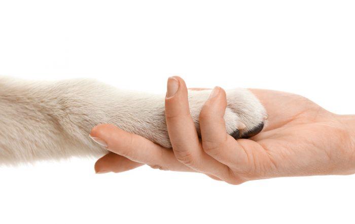 tierarzt-sterbebegleitung-euthanasie